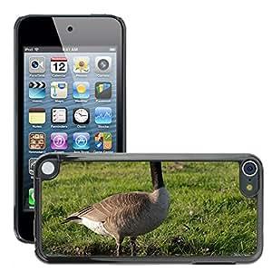 Etui Housse Coque de Protection Cover Rigide pour // M00108210 Ganso Canadiense de Vida Silvestre de // Apple ipod Touch 5 5G 5th