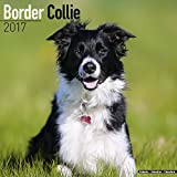 Border Collie Calendar - Border Collies Calendar - Dog Breed Calendars 2017 - Dog Calendar - Calendars 2016 - 2017 wall calendars - 16 Month Wall Calendar by Avonside