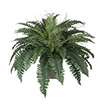House-of-Silk-Flowers-Artificial-Fern-in-Grey-Washed-Wood-Ledge
