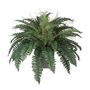 House of Silk Flowers Artificial Fern in Grey-Washed Wood Ledge 3