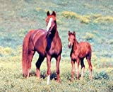 Arabian Horses 16 x 20 Animals Art Print Posters