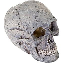 BioBubble Origins Human Skull Ornament, Large, Multicolor