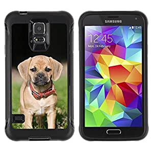 Suave TPU GEL Carcasa Funda Silicona Blando Estuche Caso de protección (para) Samsung Galaxy S5 V / CECELL Phone case / / Beagle Pug Puggle Puppy Dog Breed /