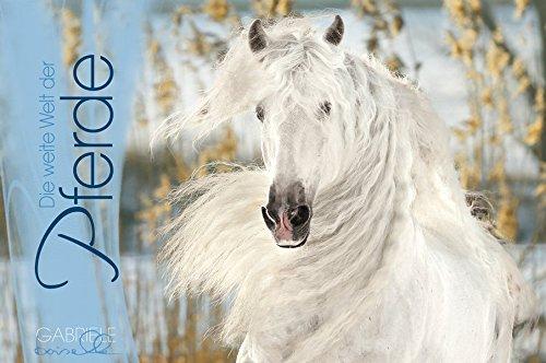 Die weite Welt der Pferde. Immerwährender Panorama Kalender