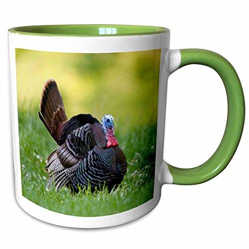 Strutting Gobblers - 3dRose Danita Delimont - Birds - Eastern Wild Turkey gobbler strutting in field, Holmes Co. MS - 15oz Two-Tone Green Mug (mug_206006_12)
