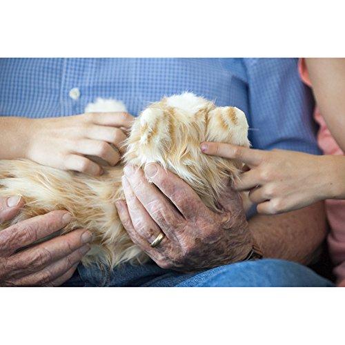 JOY FOR ALL – Orange Tabby Cat – Interactive Companion Pets – Realistic & Lifelike
