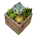 Shop Succulents Desktop Succulent Wonder