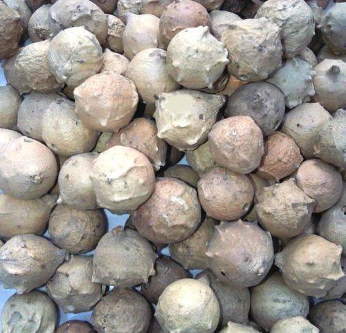 finfast-manjakani-oak-galls-1-lb