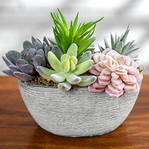MyGift Assorted Artificial Succulent Plants in Oval Textured Cement Pot by MyGift