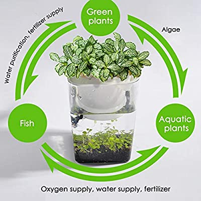 Lorchwise Plastic Mini Ecological Fish Tank - Fish Tank/Planting Cup/Planting Soil/Water Grass Mud/Water Grass Seeds: Pet Supplies