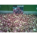 WINTER ONION SETS ELECTRIC RED - 250g APPROX 60 SETS - AVAILABLE NOW