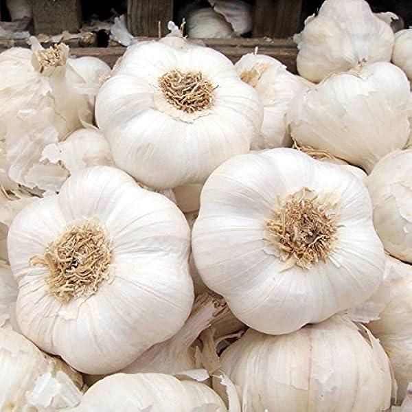 10 Garlic clove Hardy Bulb//clove Wight garlic cloves//seeds or 1 bulbs