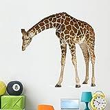 Wallmonkeys Reticulated Somali Giraffe Wall Decal Peel and Stick Animal Graphics (48 in W x 47 in H) WM104740