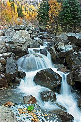 (Photograph of a Mountain Stream with a Tranquil Waterfall Among the Aspen Trees in Fall Colors. Large Wall Art Décor Photography Great Gift for Girlfriend.)
