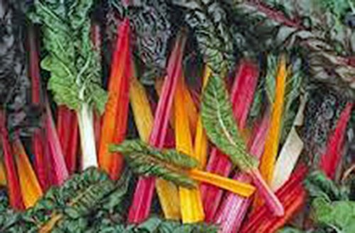 Swiss Chard Seeds,swiss Chard, Rainbow, Heirloom, Organic 25+seeds, Non Gmo