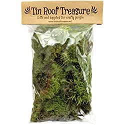 1 Square Foot Tin Roof Treasure Natural Organic Live Moss Assortment from Maine