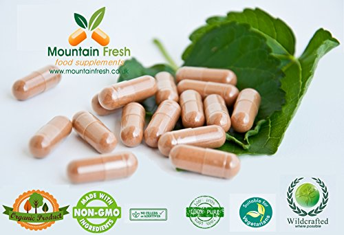 Maqui Berry poudre Pure Herb Capsules 200 x 500mg