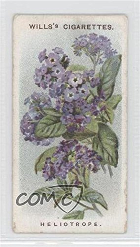 Heliotrope or Cherry Pie COMC REVIEWED Good to VG-EX (Trading Card) 1913 Wills Old English Garden Flowers Series 2 - Tobacco [Base] #34 ()