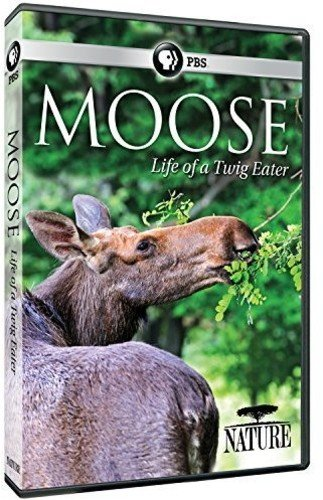 Nature: Moose: Life of a Twig - House Twig