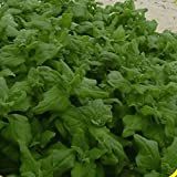 Everwilde Farms - 100 New Zealand Spinach Seeds - Gold Vault Jumbo Seed Packet