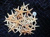 """Hinterland Trading 35 Pack of 1 1/12"""" to 2 1/4"""" Starfish"""