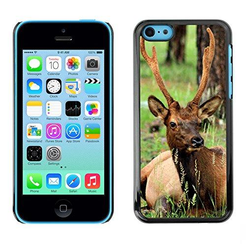 Premio Sottile Slim Cassa Custodia Case Cover Shell // F00015216 cerf // Apple iPhone 5C