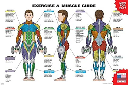 Amazon.com: Exercise and Muscle Guide Male 2016 Copyright Algra ...