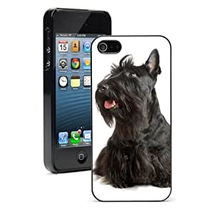 Pink Ladoo? For iPhone 4 4S Hard Case Cover Black Scottish Terrier Scottie