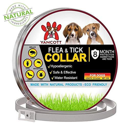 flea collar dogs