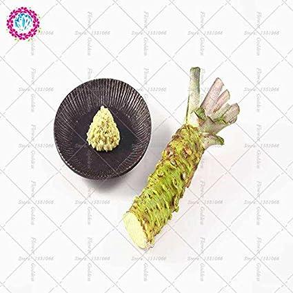 Semillas 50pcs wasabi, vegetal de semillas de rábano picante japonés para plantar fácil de cultivar bonsais de la planta DIY jardín de la planta