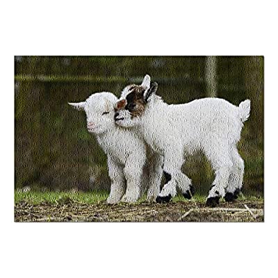 White Goat Kids Playing in Pasture 9007731 (Premium 500 Piece Jigsaw Puzzle for Adults, 13x19, Made in USA!): Toys & Games
