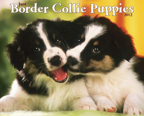 Just Border Collie Puppies 2012 Calendar (Just (Willow Creek))