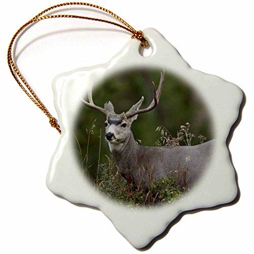 3dRose Danita Delimont - Deer - USA, Wyoming, Yellowstone, Mule Deer - US51 JMC0009 - Joe and Mary Ann McDonald - 3 inch Snowflake Porcelain Ornament (orn_148981_1) Wyoming Mule