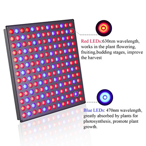 51c8yQF0dQL - LED Grow Light Panel 45W, Reflector LED Plant Growing Light with Red Blue Bulbs Spectrum for Indoor Plants Veg Seedling Growing and Flowering by Lightimetunnel
