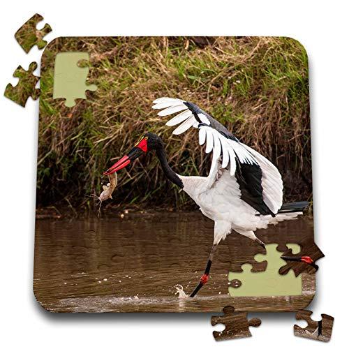 Saddle Stork Billed - 3dRose Danita Delimont - Storks - Kenya, Saddle-Billed Stork, with Fish - 10x10 Inch Puzzle (pzl_310437_2)