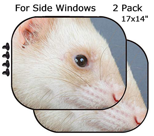 MSD Car Sun Shade - Side Window Sunshade Universal Fit 2 Pack - Block Sun Glare, UV and Heat for Baby and Pet - Image 21215188 Close up Portrait of Four Years Old Pastel Ferret