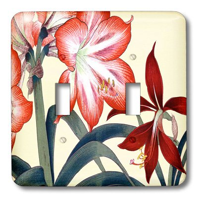 3dRose lsp/_171388/_2 Amaryllis Flowers In Peach And Dark Red With Yellow Stamens Toggle switch Multicolor