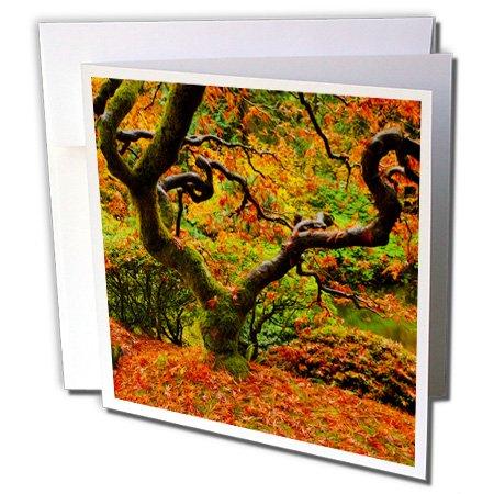 3dRose Autumn at the Portland Japanese Garden Portland Oregon USA Greeting Cards, Set of 6 (gc_191630_1) ()