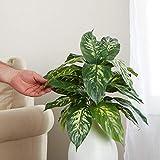 Factory Direct Craft Artificial Dumb Cane Leaf