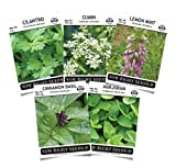 Sow Right Seeds - Mexican Herb Garden Seed Collection to Plant - Individual Packets of Cilantro, Cinnamon Basil, Cumin, Lemon Mint, Marjoram, Non-GMO Heirloom with Instructions for Planting