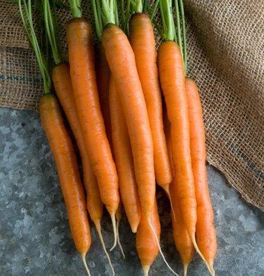 David's Garden Seeds Carrot Mokum D2186PO (Orange) 500 Hybrid Seeds