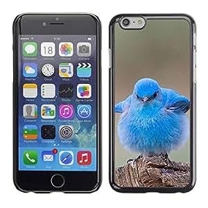 TopCaseStore / la caja del caucho duro de la cubierta de protección de la piel - Pet Bird Nature Blue Ornithology - Apple iPhone 6 Plus 5.5