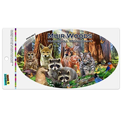 GRAPHICS & MORE Muir Woods National Monument California CA Redwoods Forest Animals Automotive Car Refrigerator Locker Vinyl Euro Oval Magnet