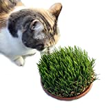 1CAMO Cat Grass, Small Pet Treat, Wheat Grass for ...