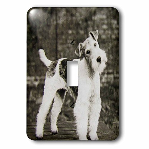 3dRose LSP_246098_1 Vintage Wire Hair Fox Terrier Dog Circa 1900 Edwardian Era Single Toggle Switch