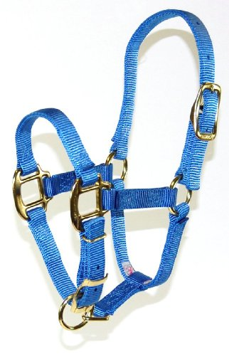 Nylon Halter Foal - Hamilton 3/4 Adjustable Quality Horse Halter, 100 to 200-Pound  Foal,  Berry