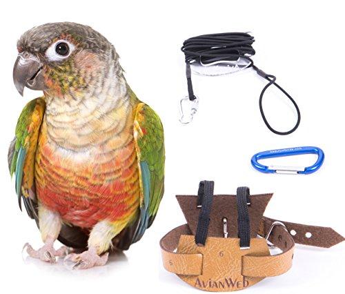 the aviator harness - 9