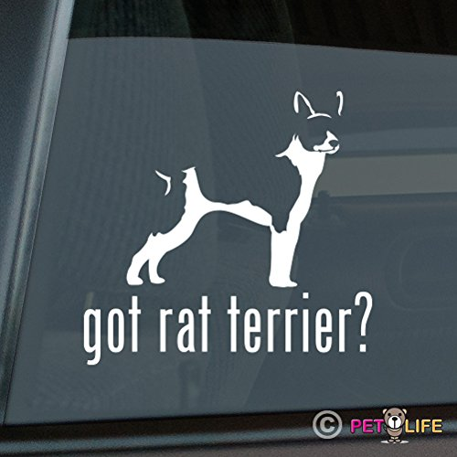 Mister Petlife Got Rat Terrier Sticker Vinyl Auto Window -