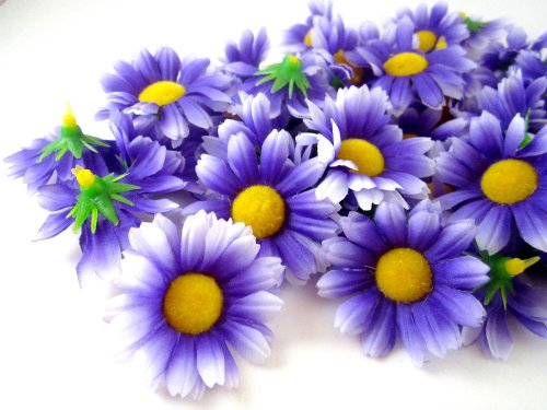 (24) Silk Purple and White Border Gerbera Daisy Flower Heads , Gerber (Gerber Daisy Border)