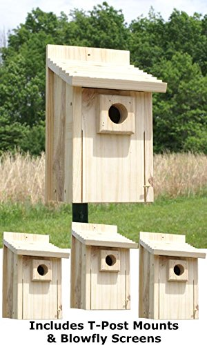 Stokes Bluebird House Package with